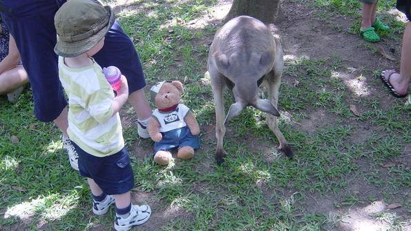 Feed kangaroopouch